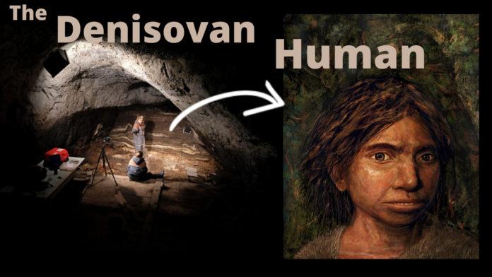 The Denisovan Human